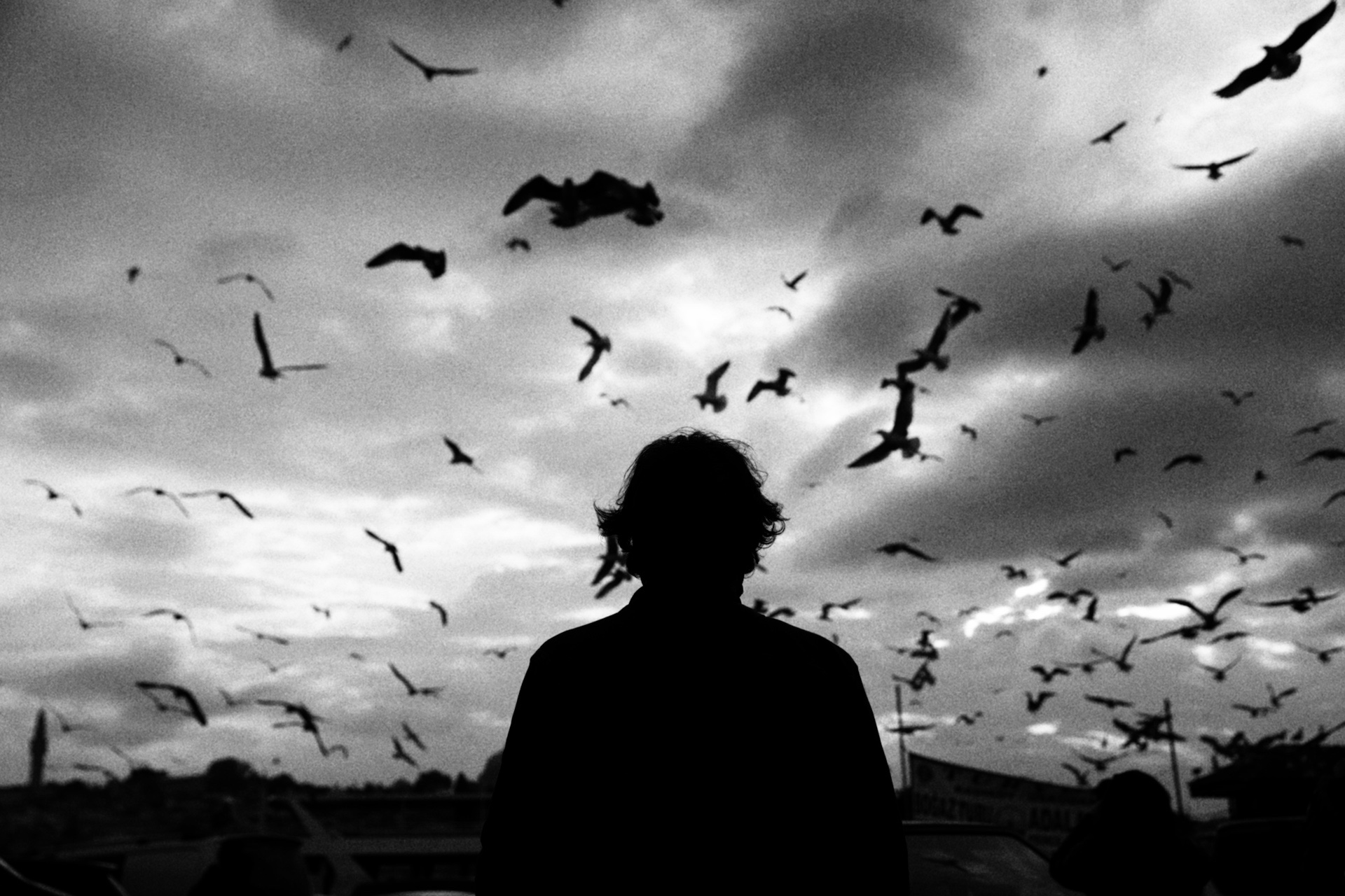 The Birds of Istanbul~